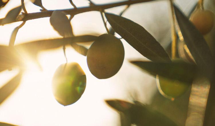 quand les fruits et légumes produisent de l energie